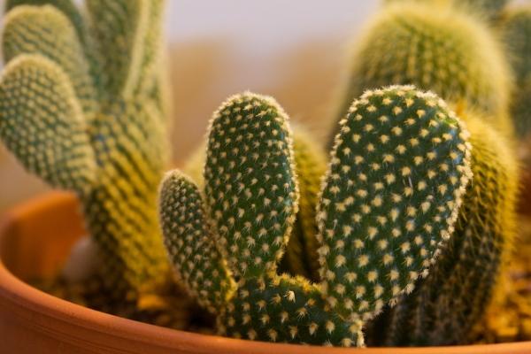 Cactus_Lady 13