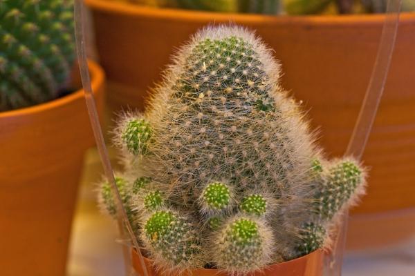 Cactus_Lady 17